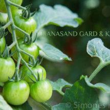 Hanasand gard in Rennesoy | insimonesk.wpengine.com