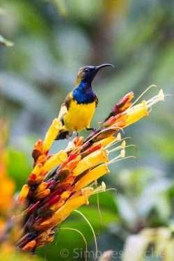 Tropical bird | insimoneskitchen.com
