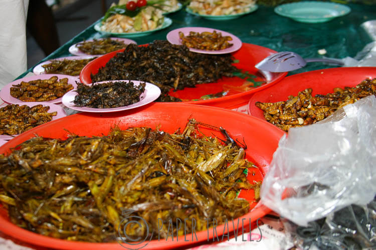 Grasshoppers in all shapes and sizes