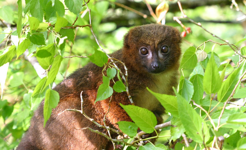 National parc Ranomafana | insimoneskitchen.com