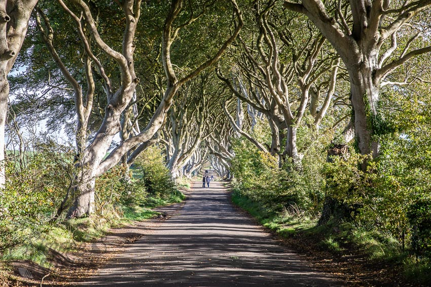 The dark hedges | insimoneskitchen.com